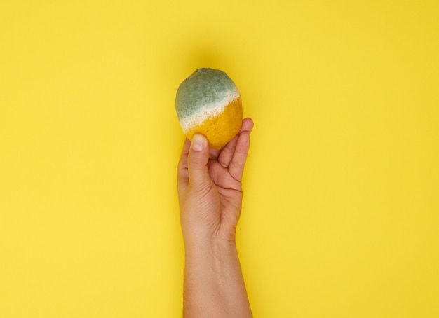 Weibliche hand, die gelbe ganze zitrone mit weißem schimmel hält