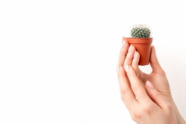 Weibliche hand, die kleinen kaktus hält