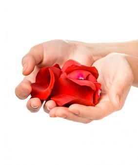Weibliche hand, die rosafarbene blumenblätter anhält