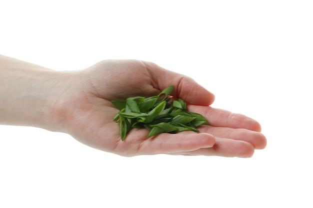 Weibliche hand halten gehackte grüne zwiebel, lokalisiert auf weißem isoliertem hintergrund