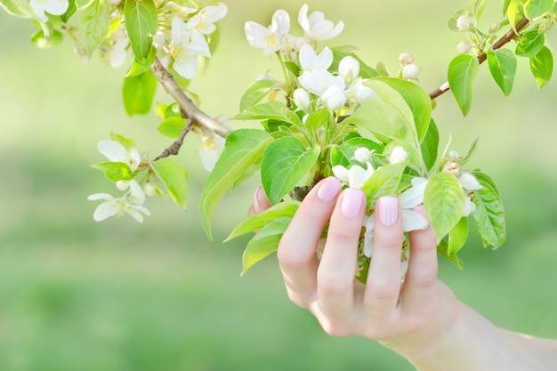 Weibliche hand mit apfelbaumblumen