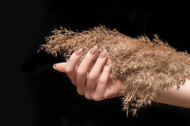 Weibliche hand mit beigefarbenem nageldesign. glitzerbeige nagellack-maniküre. frauenhand mit trockener schilfblume lokalisiert auf schwarzem hintergrund.