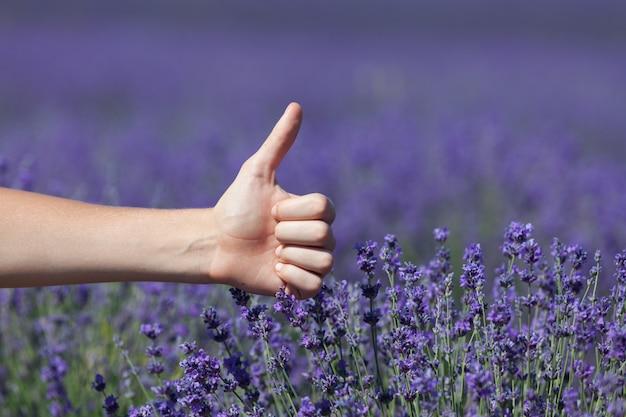 Weibliche hand mit erhobenem daumen (wie symbol) auf dem hintergrund des blühenden lavendelfeldes. selektiver fokus, gestaltungselement. konzept - sommerferien und gute laune.