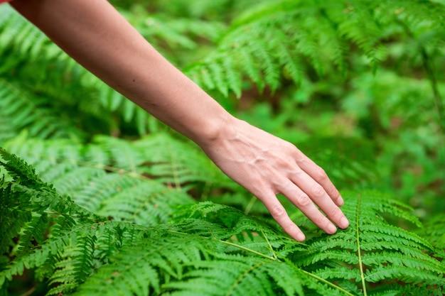 Weibliche hand, mit langen anmutigen fingern berührt sanft die pflanze, blätter von farn. nahaufnahme der nicht erkennbaren person.