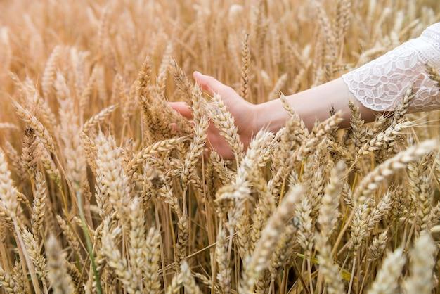 Weibliche hand über weizenfeld, sommerzeit. erntekonzept