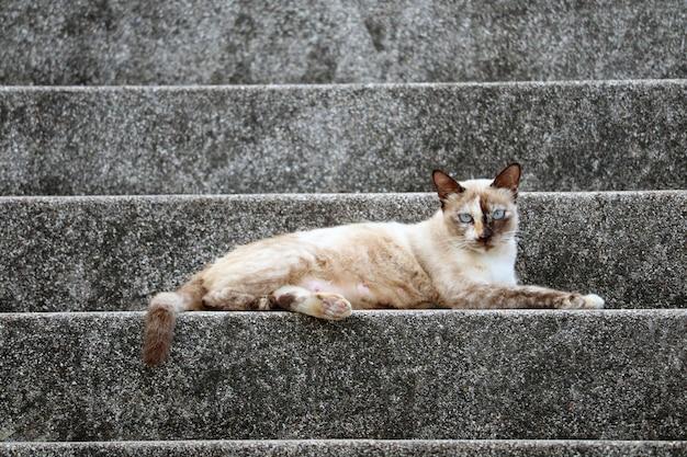 Weibliche katze, die zur kamera schaut und es hat zwei farbe des pelzes auf gesicht