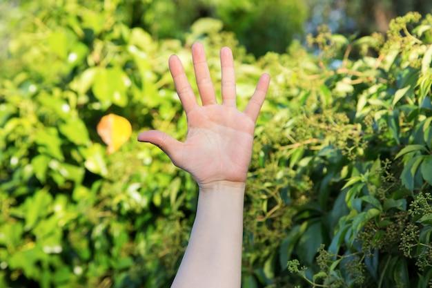 Weibliche linke hand offen mit ausgestreckten fingern