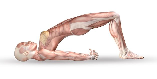 Weibliche medizinische zahl 3d mit muskelkarte in yogaposition