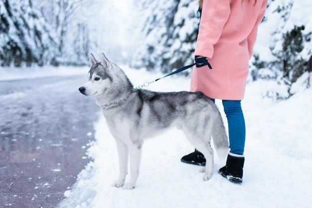 Weibliche person geht im park mit siberian husky