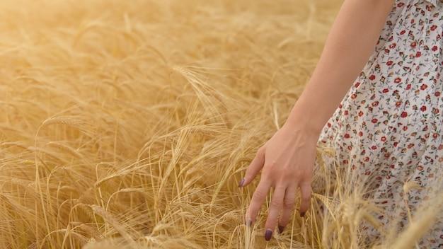 Weibliche personenhand gegen weizenähren. schönes mädchen auf gelber wiese.