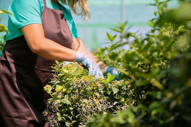 Weiblicher florist, der busch mit gartenschere im gewächshaus schneidet. frau, die im garten arbeitet und pflanzen in töpfen wächst. beschnittener schuss. gartenberufskonzept Kostenlose Fotos