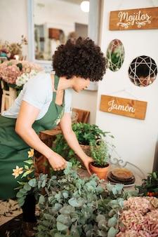 Weiblicher florist, der topfpflanze im shop vereinbart