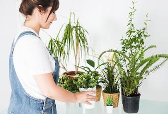 Weiblicher Florist, der Topfpflanze über Schreibtisch hält