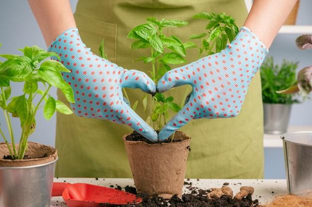 Weiblicher gärtner, der anlagen am haus unter verwendung der werkzeuge vereinbart