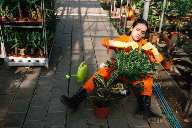 Weiblicher gärtner, der blätter der topfpflanze überprüft