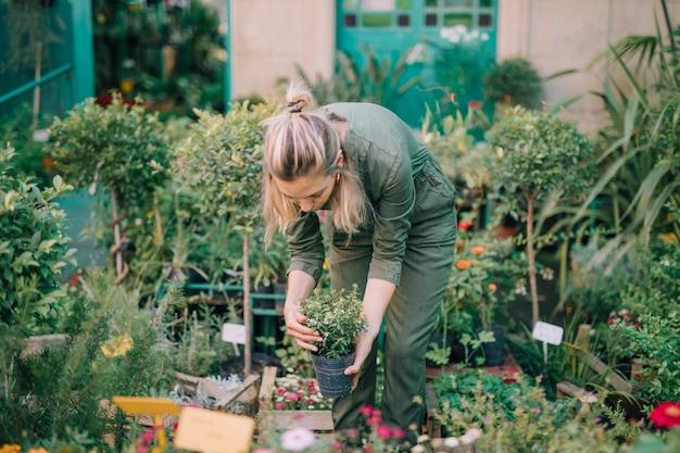 Weiblicher gärtner, der den topf in der betriebskindertagesstätte anordnet