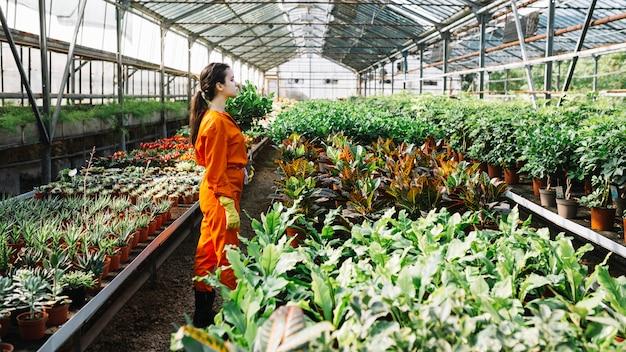 Weiblicher gärtner, der die nahen anlagen wächst im gewächshaus steht
