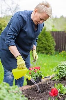 Weiblicher gärtner, der fruchtbaren boden wässert, der blühende petunien im garten pflanzt