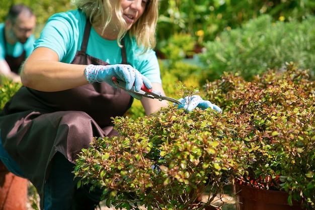 Weiblicher gärtner, der pflanzen mit gartenschere im gewächshaus schneidet. frau, die im garten arbeitet. beschnittener schuss. gartenberufskonzept