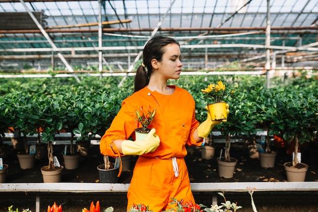 Weiblicher gärtner, der zwei topfpflanzen mit roten und gelben paprikas im gewächshaus hält