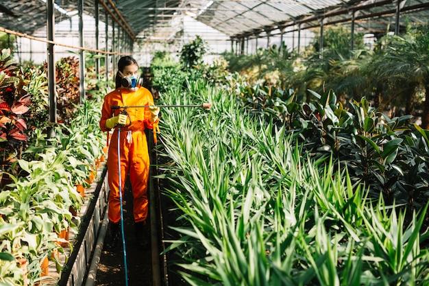 Weiblicher gärtner in sprühendem insektizid der arbeitskleidung auf anlagen im gewächshaus