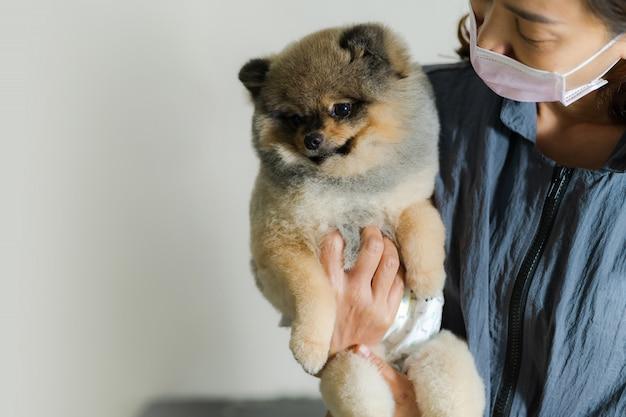 Weiblicher groomer, der einen hund an einem salon im schönheitssalon für hunde hält