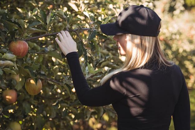 Weiblicher landwirt, der apfelbaum betrachtet