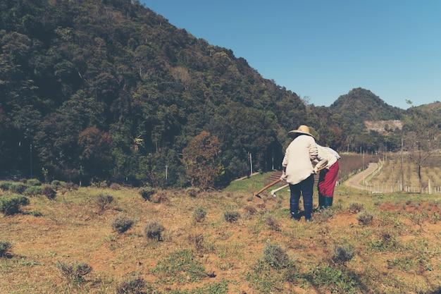 Weiblicher landwirt, der landschaft für pflanzenfarm vorbereitet, unkraut im boden in der hügelfarm beseitigt