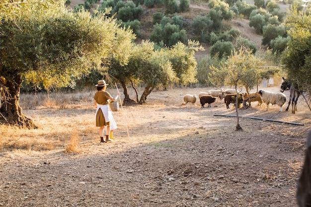 Weiblicher landwirt, der schafe in einem olivengarten in herden lebt