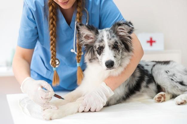 Weiblicher tierarzt, der eine einspritzung auf das bein des hundes gibt