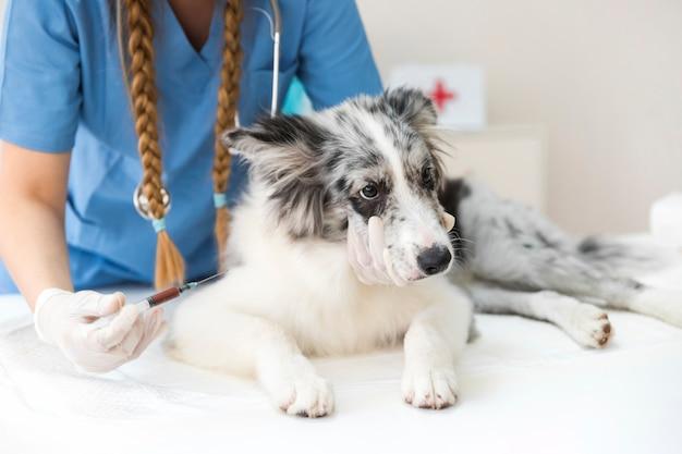 Weiblicher tierarzt, der hund mit einspritzung auf tabelle einspritzt