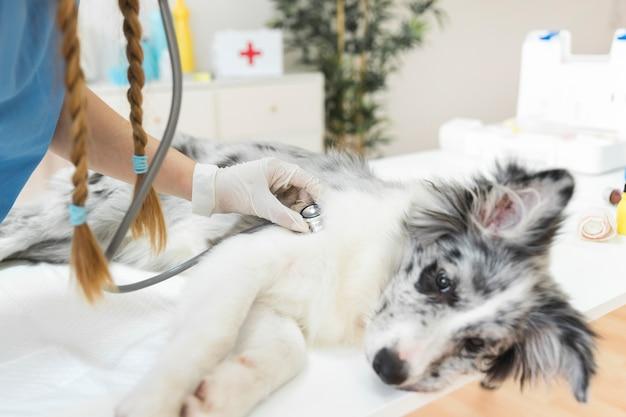 Weiblicher tierarzt, der hund mit stethoskop auf tabelle in der klinik überprüft