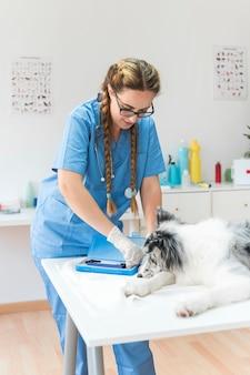 Weiblicher tierarzt, der otoscope vom blauen kasten mit hund auf tabelle in der klinik nimmt