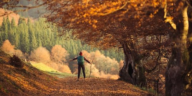 Weiblicher wanderer, der unter den strahlen der morgensonne in der bergwaldfrau wandert