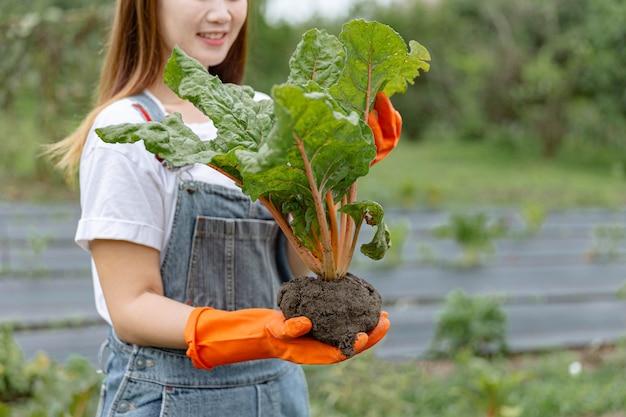 Weibliches gärtnerkonzept ein weiblicher greenkeeper, der die pflanze sorgfältig hält und ihr äußeres erscheinungsbild überprüft, bevor sie zum verkauf gesendet wird.