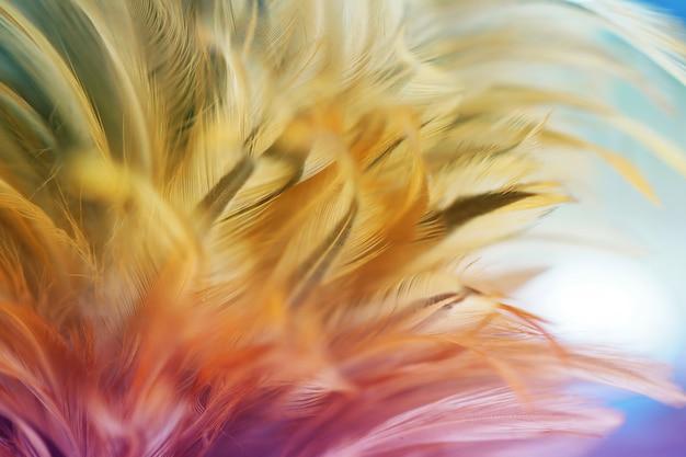 Weiche farbe der hühnerfederbeschaffenheit für hintergrund, unschärfestile