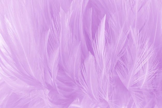 Weiche purpurrote farbe versieht beschaffenheitshintergrund mit federn.