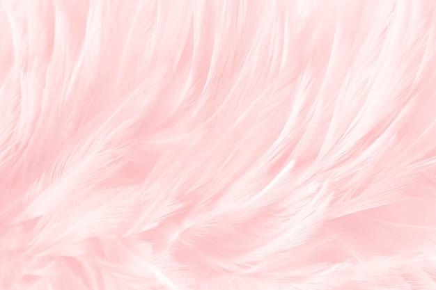 Weiche rosa federn