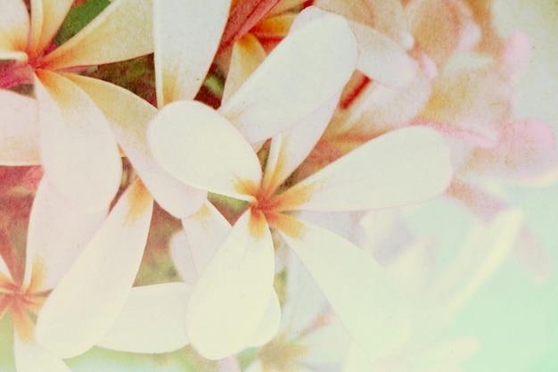 Weiche und undeutliche blume mit süßem farbhintergrund der steigung