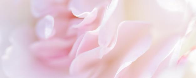 Weicher fokus abstrakter blumenhintergrund blassrosa rosenblütenblätter makro blumen hintergrund für