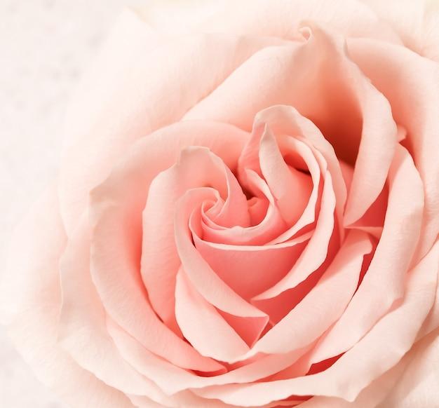 Weicher fokus abstrakter blumenhintergrund rosa rosenblumenmakro blüht hintergrund für feiertagsmarke