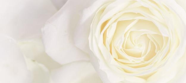 Weicher fokus abstrakter blumenhintergrund weiße rose blume makro blumen hintergrund für urlaubsdesign