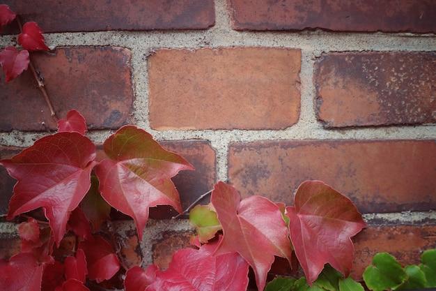 Weicher fokus der roten ahornblätter auf der alten backsteinmauer im herbst. vintage-stil bild.