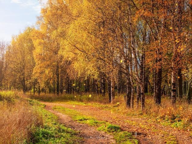 Weicher fokus. herbstlaub fallen. ein weg in einem sonnigen herbstpark mit fallenden blättern. landstraße durch einen ahorn- und birkenwald.