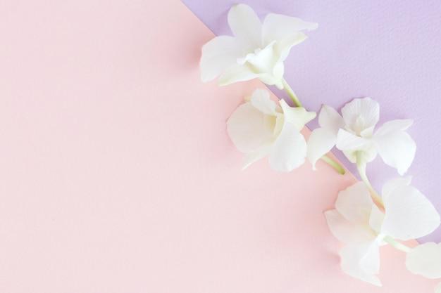 Weicher und verschwommener fokus auf die süßen blumen mit pastellfarbenem hintergrund.