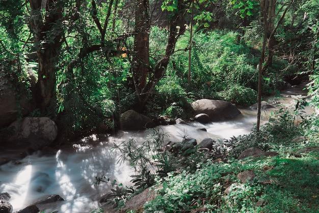 Weiches wasser des stromes im naturpark, schöner wasserfall im regenwald