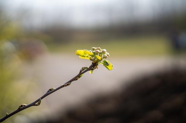 Weichzeichner eines pflanzensprosses