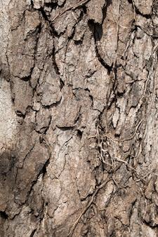 Weichzeichner von rinde textur hintergrundmuster riss