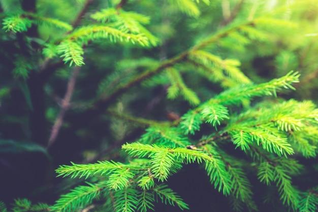 Weichzeichnerbild des grünen naturhintergrunds.