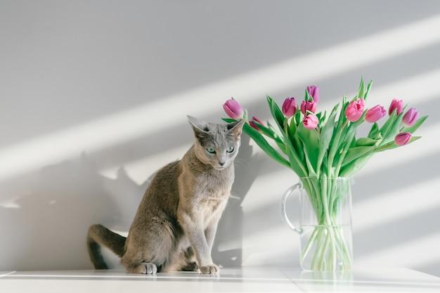 Weichzeichnerporträt der verspielten und aktiven russischen blauen katze, die auf tisch mit blumenstrauß der tulpen in der glasvase aufwirft.